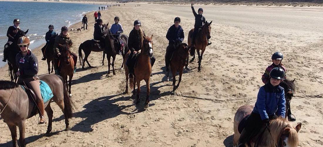 paarden zoeken knhs